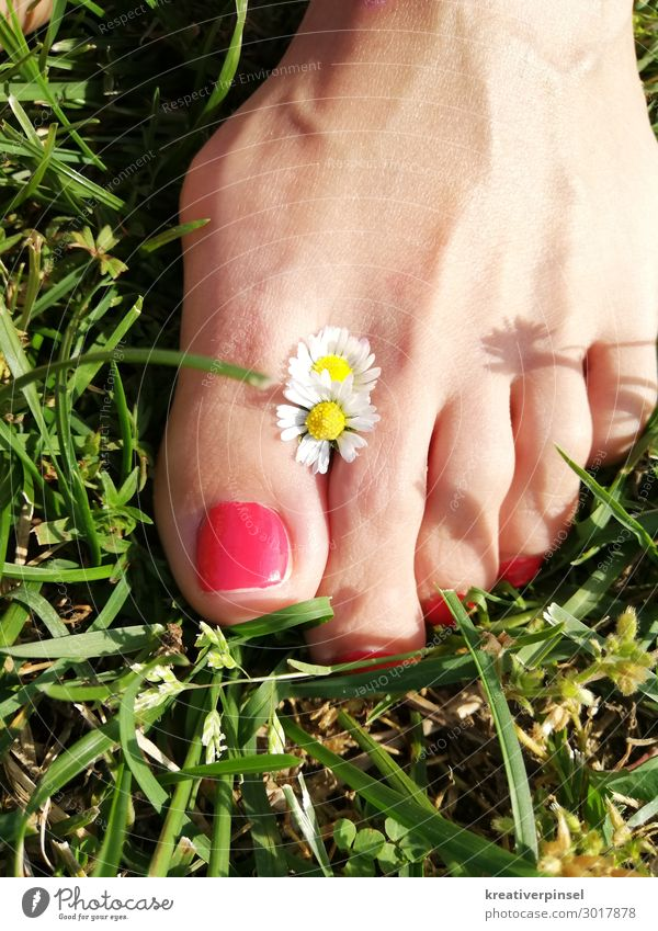 Foot in luck Happy Pedicure Summer Sun Feminine Feet Plant Earth Beautiful weather Flower Grass Wild plant naturally Yellow Green Red White Exterior shot Day