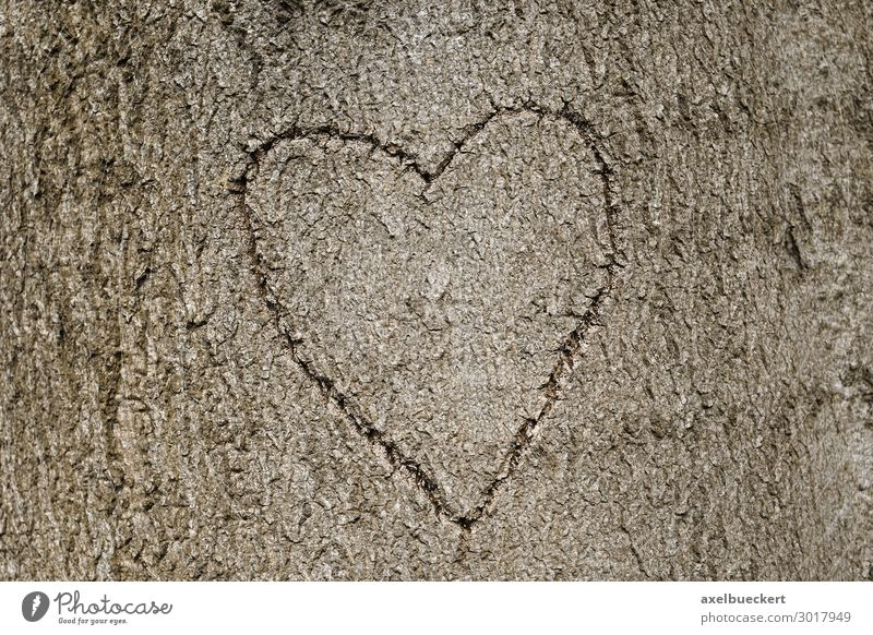 Heart symbol carved in tree Lifestyle Valentine's Day Nature Tree Forest Sign Love Symbols and metaphors Background picture Heart-shaped Display of affection
