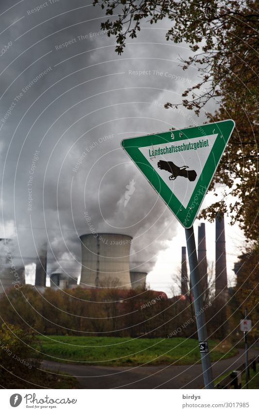 Tree Dark Germany Copy Space Energy industry Signs and labeling Threat Environmental protection Exhaust gas Climate change Environmental pollution Steam