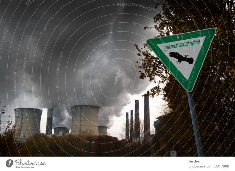 Tree Dark Germany Copy Space Energy industry Signs and labeling Authentic Threat Exhaust gas Politics and state Climate change Environmental pollution Steam