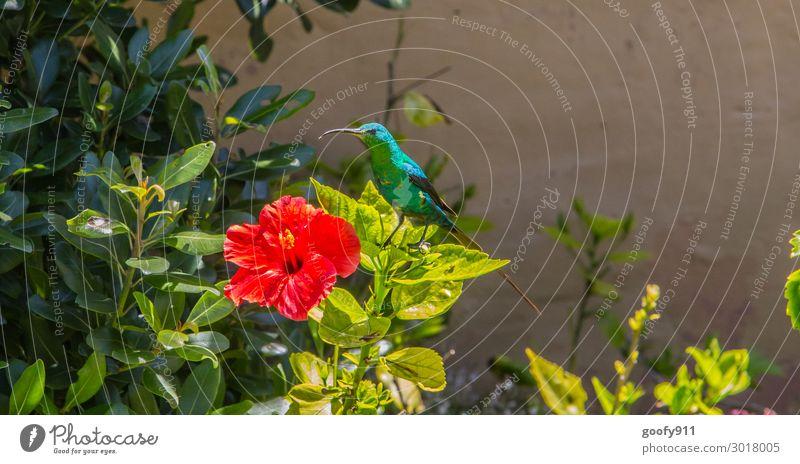 hummingbird Trip Adventure Far-off places Freedom Safari Expedition Sun Nature Sunlight Plant Flower Bushes Blossom Garden Park Animal Wild animal Bird