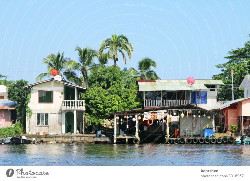 life on the river, in tortuguero Costa Rica Exterior shot Colour photo Deserted Nature Sunlight Vacation & Travel Adventure Trip Tourism Freedom Far-off places