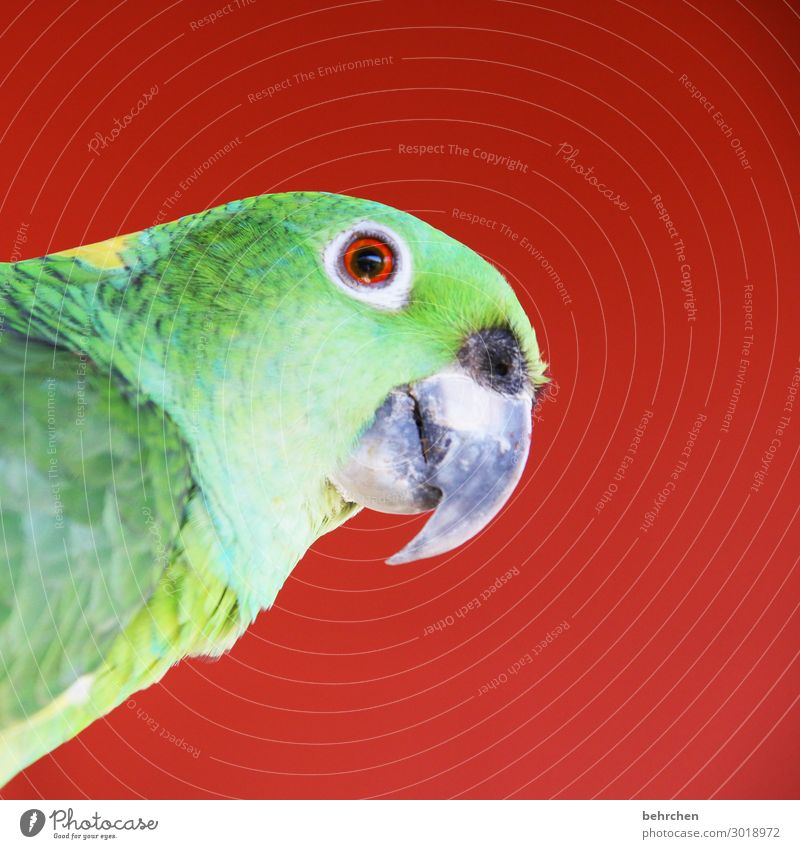 moinsen| colourful picture with parrot Animal portrait Contrast Light Day Deserted Detail Close-up Exterior shot Colour photo Wanderlust Love of animals