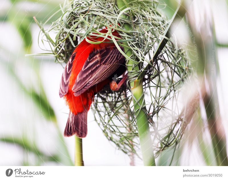 valuable at home. Vacation & Travel Tourism Trip Adventure Far-off places Freedom Safari Wild animal Bird Wing Feather weaver bird Red Bishop Build Exceptional