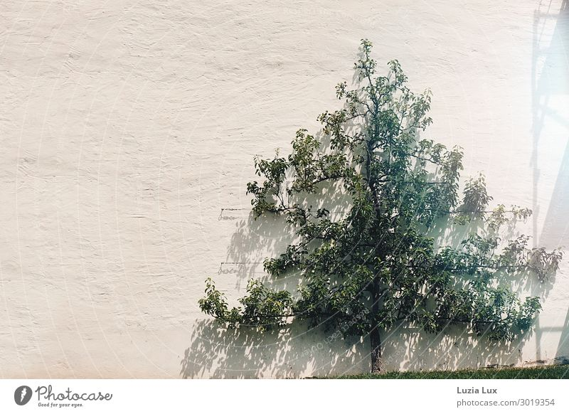 Light and shadow Nature Plant Sun Sunlight Summer Beautiful weather Tree House (Residential Structure) Wall (barrier) Wall (building) Green Subdued colour