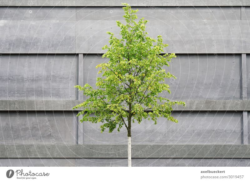 Tree in front of concrete facade Environment Nature Spring Plant Town Deserted Manmade structures Building Architecture Wall (barrier) Wall (building) Facade