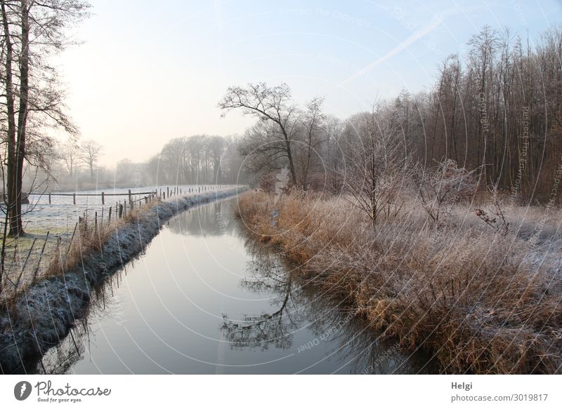 frosty winter landscape in the morning with river, trees, grasses and fence Environment Nature Landscape Plant Water Sky Winter Ice Frost Tree Grass Bushes