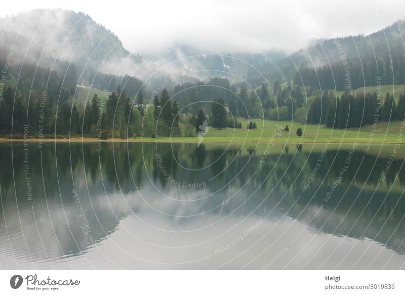 Landscape shot at Spitzingsee, mirrored with mountains and fog Environment Nature Plant Water Spring Fog Tree Grass Alps Lakeside Relaxation Esthetic