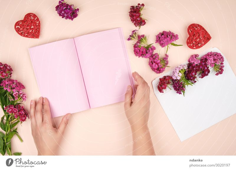 female hands and an open notebook with pink blank sheets Woman Human being Nature Plant White Red Hand Flower Adults Love Natural Fashion Pink Body Fresh Open