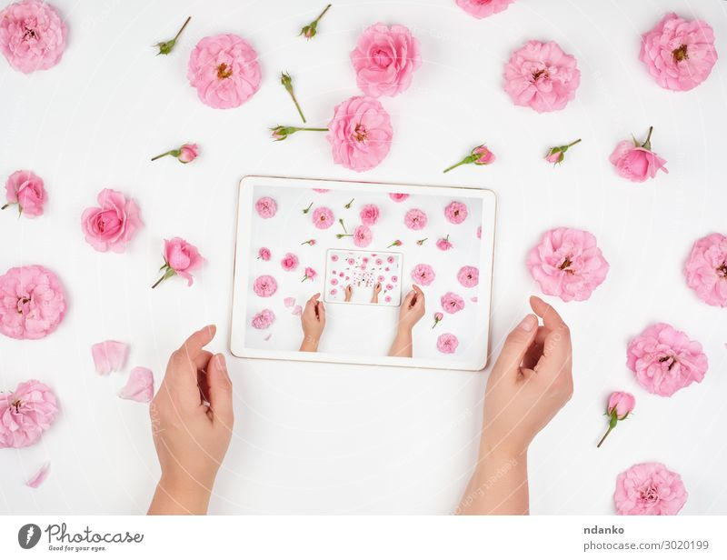 white electronic tablet Decoration Office Business PDA Computer Screen Technology Internet Woman Adults Hand Fingers Flower Modern Pink White Blank blooming Bud