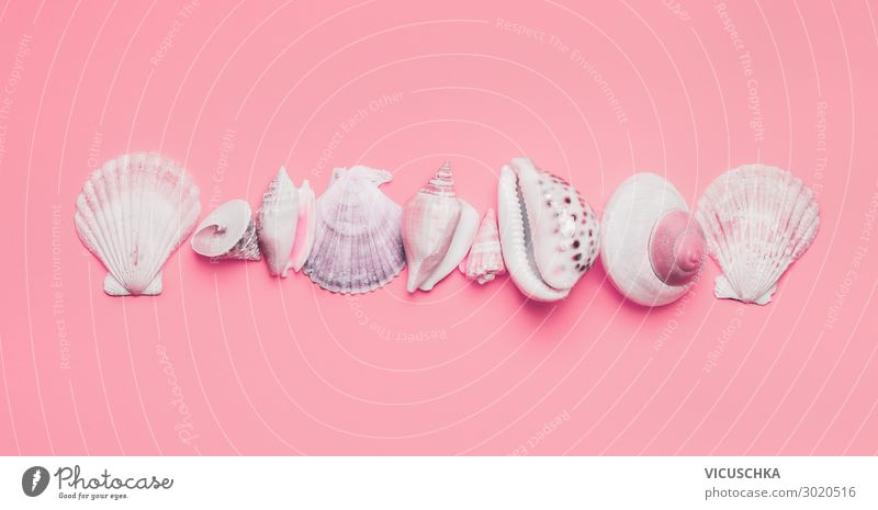 Vacation & Travel Summer White Background picture Style Pink Design Decoration Summer vacation Collection Still Life Mussel Hipster
