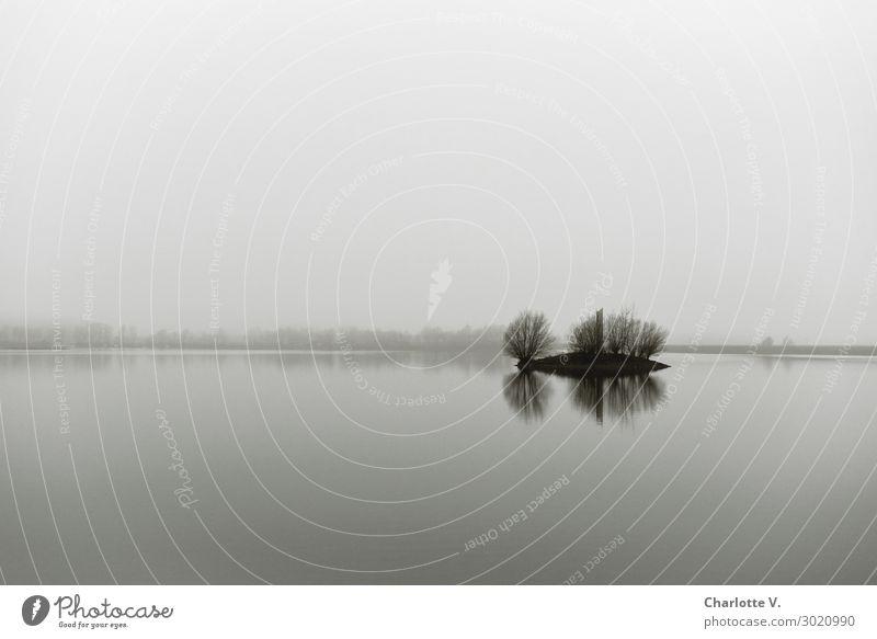 Airy, lots of room. Nature Landscape Elements Water Sky Cloudless sky Winter Fog Tree Island Lake Förmitz memory Tower Esthetic Dark Simple Infinity Gray Calm