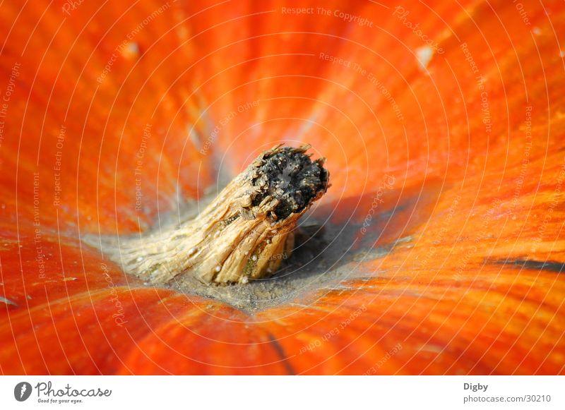 pumpkin style Pumpkin. style Orange Macro (Extreme close-up) Detail