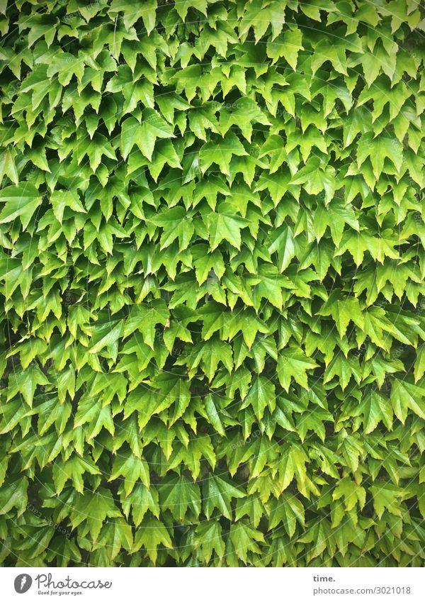 Green Alliance Nature Beautiful weather Plant Leaf Wild plant Vine Growth Elegant Natural Joie de vivre (Vitality) Protection Together Patient Calm Authentic