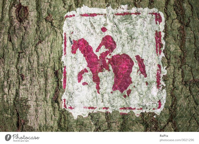 Signpost for horse lovers. hiking trail Road marking Arrow Lettering bark tree Moss Heathland Landscape Luneburg off path Nature reserve Autumn Winter Season