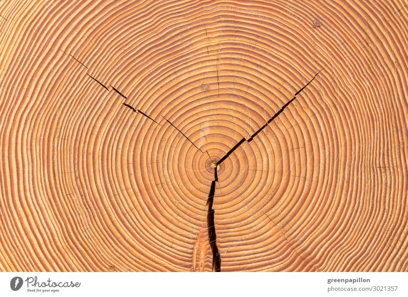 Years of life - wooden disc Nature Tree Old Tree trunk Wood Wooden floor tree rings Circle Brown Structures and shapes Background picture Natural Build