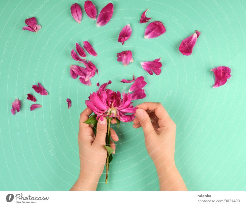 two hands of a young girl with smooth skin Woman Nature Summer Beautiful Green Red Hand Flower Adults Blossom Natural Feasts & Celebrations Fashion Pink Above