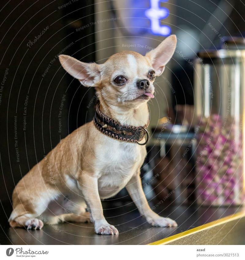 funny pet Pet Happy Pride dog cute smart Colour photo Exterior shot Deserted Evening Animal portrait