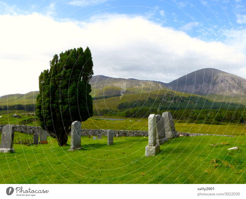 Old Tree Loneliness Calm Mountain Grass Wall (barrier) Eternity Transience Past Grief Scotland Cemetery Tombstone Highlands