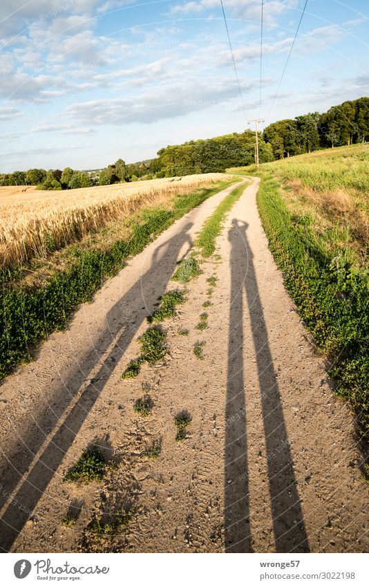 Long shadows of a couple in the low sun on a field path to the lime tree quarry near Schwaan Landscape Nature Clouds Sky Summer Colour photo Meadow Grass Green