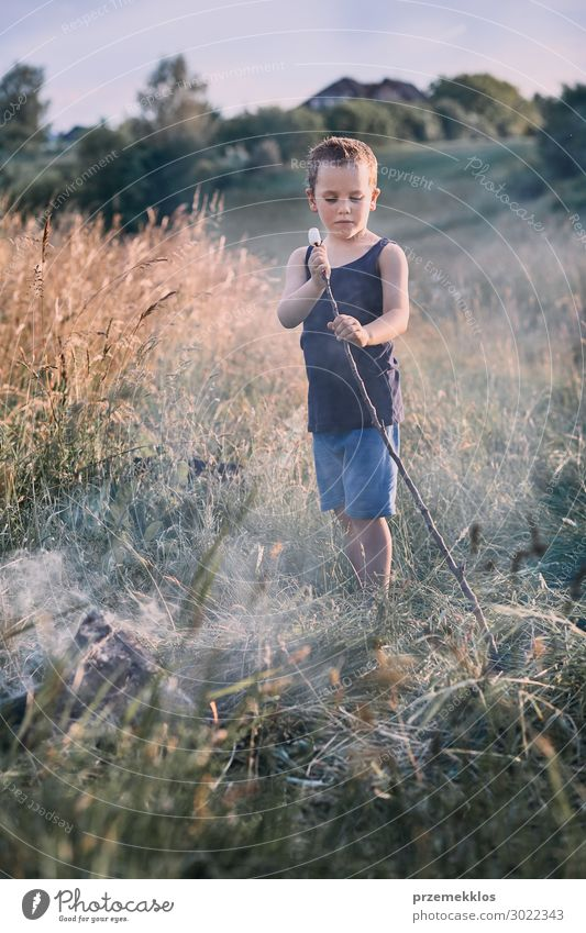 Little boy roasting marshmallow over a campfire Child Human being Vacation & Travel Nature Summer Green Landscape Joy Lifestyle Environment Natural Meadow Happy