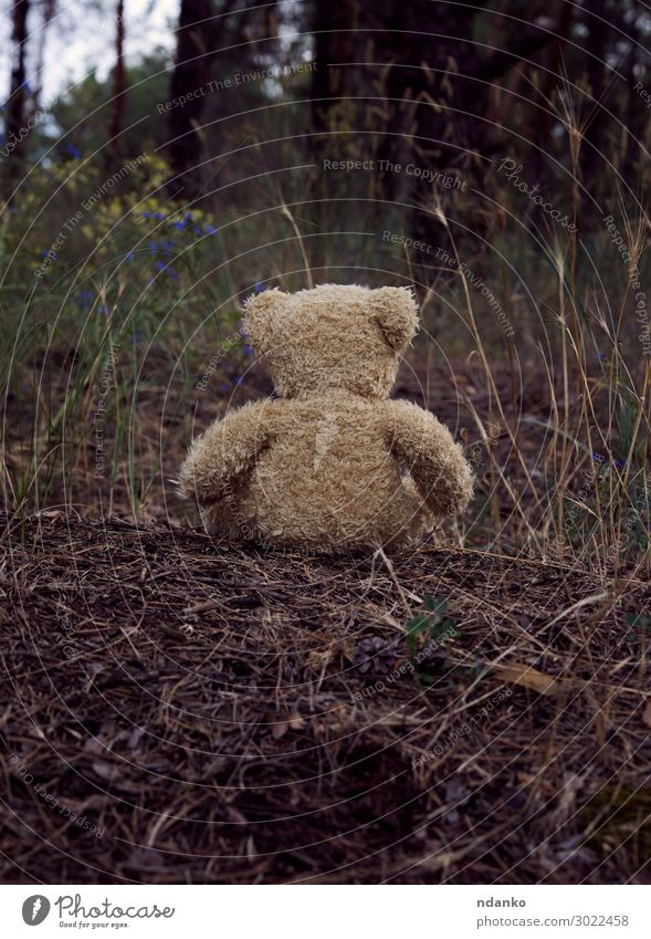 brown teddy bear sits back Summer Infancy Nature Landscape Sand Tree Park Forest Hill Street Fur coat Toys Doll Teddy bear Sit Sadness Small Natural Cute Retro