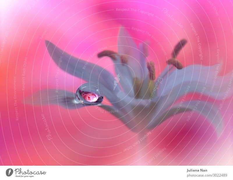 Beautiful Nature Macro Photography.Web Banner for Design.Art. Lifestyle Elegant Style Joy Work of art Plant Drops of water Rose Water Blossoming Infinity Near