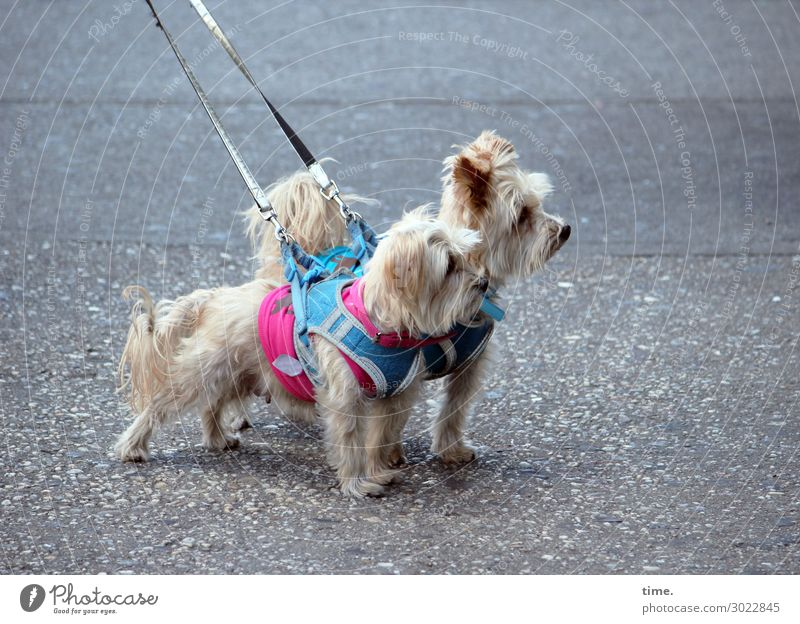 Dog Animal Calm Street Lanes & trails Together Friendship Moody Decoration Pair of animals Stand Adventure Curiosity Discover Attachment Asphalt
