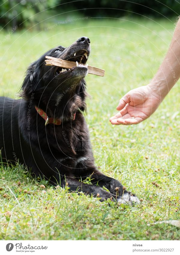 Master asks dog for stick Healthy Harmonious Playing Garden Sports Human being Masculine Man Adults Hand Nature Beautiful weather Grass Bushes Meadow Neckband