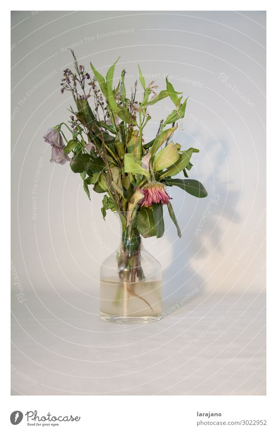 Dead flowers Plant Flower Blossom Container Decoration Glass Water Beautiful Trashy Feminine Green Pink Serene Sadness Death Decadence Time Flowerpot