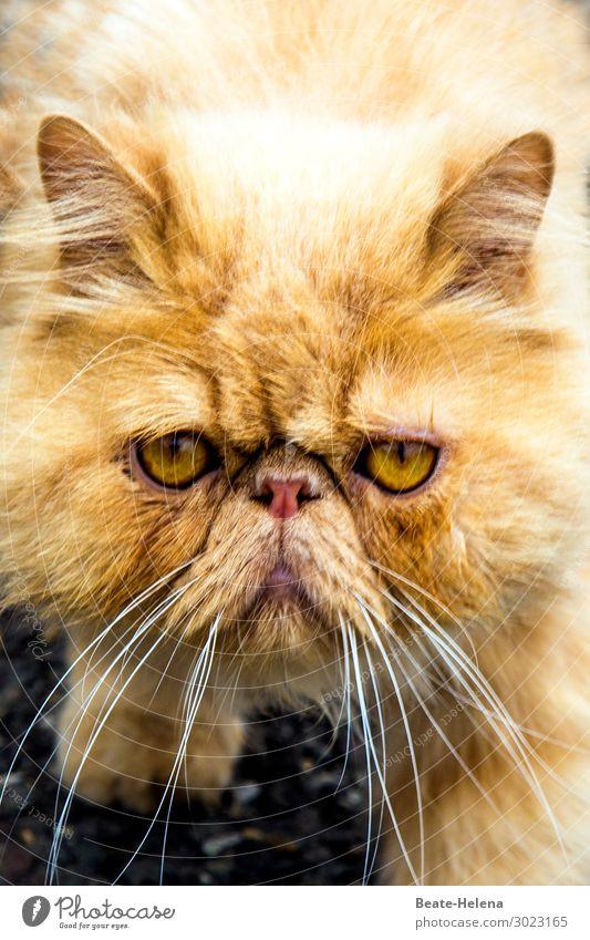 1100 | Happy New Year Celebration Elegant Style Beautiful Pet Cat Animal face Observe Blossoming Think Relaxation Glittering To enjoy Communicate Illuminate
