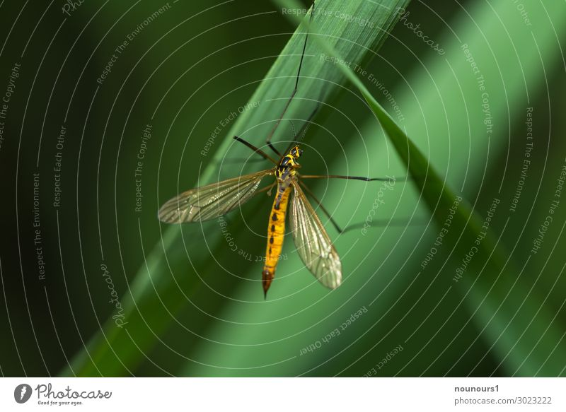 hanging section Sunlight Summer Plant Foliage plant Animal Wild animal Crane fly 1 Hang To swing Yellow Green Black Colour photo Multicoloured Exterior shot
