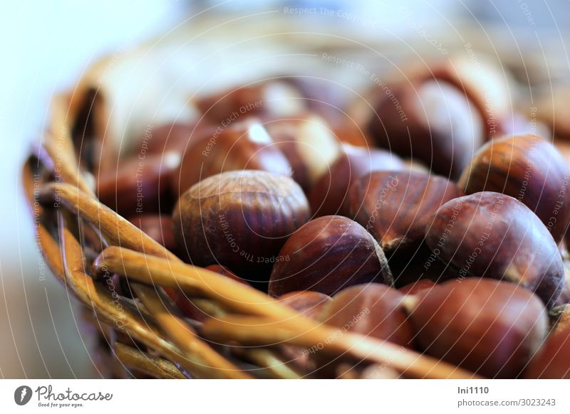 chestnuts Nut Plant Autumn Tree Agricultural crop Sweet chestnut Garden Park Field Forest Blue Brown Yellow Gray Christmas Fair Stove & Oven Beech family