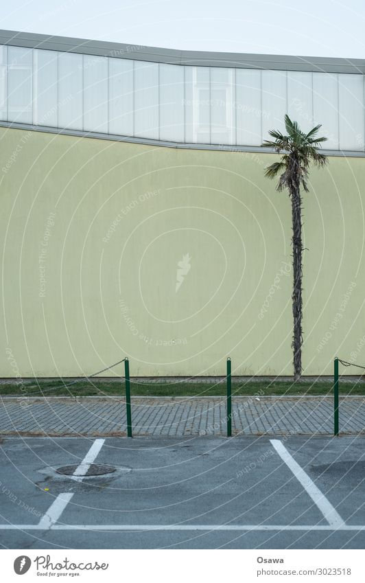Palm tree in front of facade built Facade Parking lot Exterior shot Architecture Manmade structures Colour photo Deserted Window Sky Gloomy Wall (building) Gray