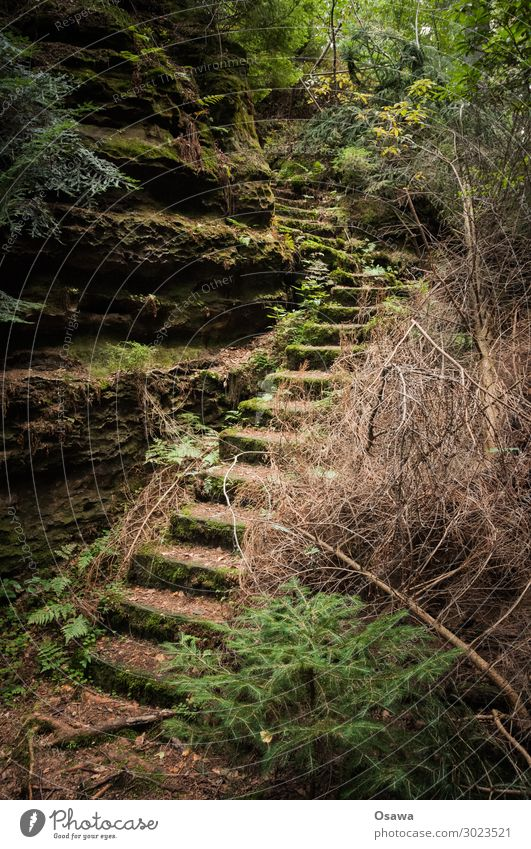 Stairs in Saxon Switzerland Landscape Mountain Rock Nature Highlands Rock formation Forest Tree Leaf Green Undergrowth Bushes Old Deserted Loneliness