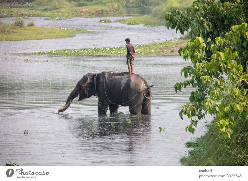 Real friends Adventure Far-off places Safari Masculine 1 Human being Nature Landscape Water River bank Animal Farm animal Wild animal Elephant