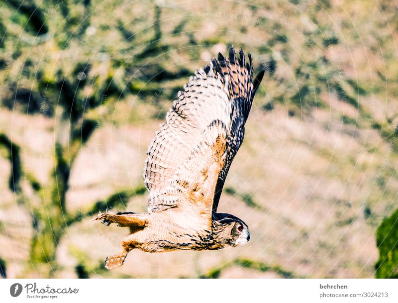 Nature Beautiful Tree Animal Forest Exceptional Freedom Bird Flying Field Wild animal Feather Fantastic Wing Ease Animal face