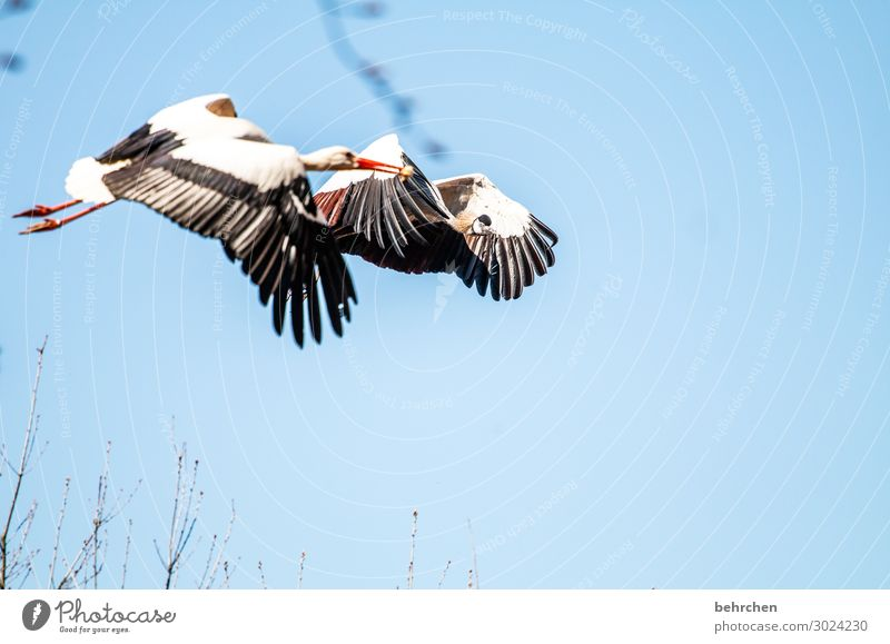 airy friendship Sky Wild animal Bird Animal face Wing Stork Crane Chick Metal coil Flying To feed Exceptional Elegant Fantastic Beautiful Together