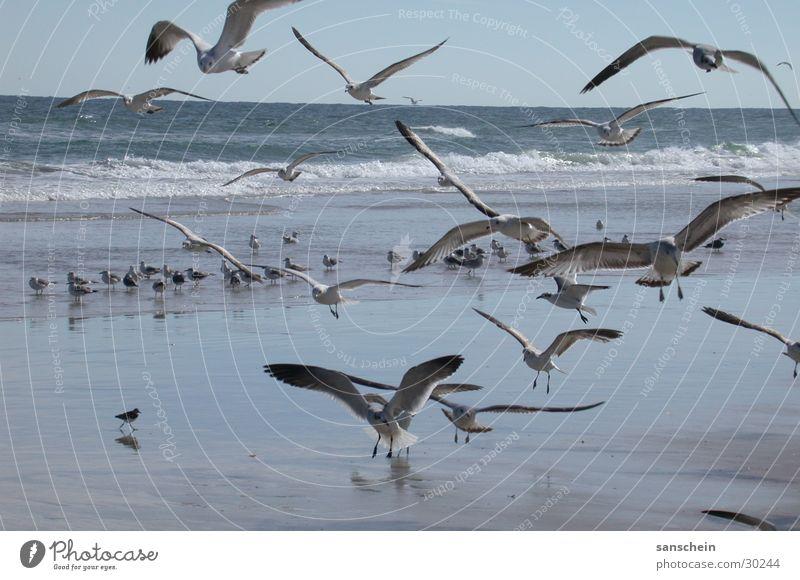 Nature Ocean Beach Animal Bird Americas Seagull Florida Daytona Beach