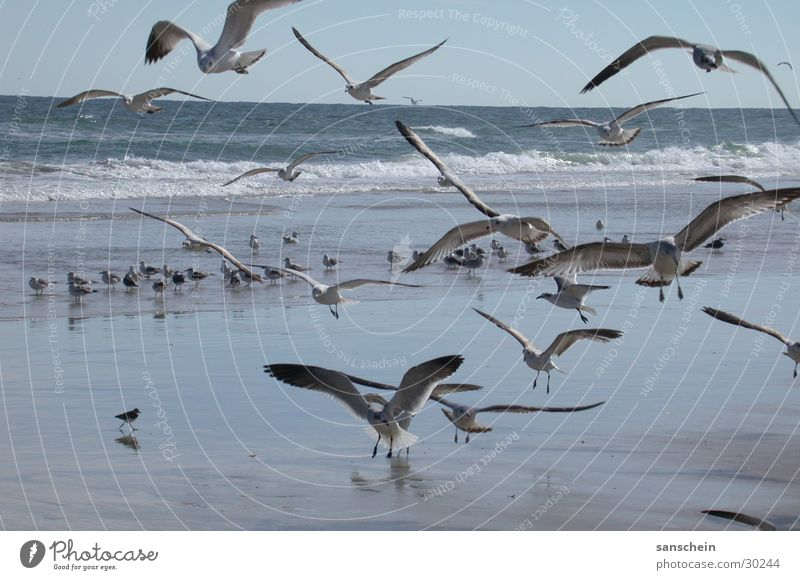 Nature Ocean Beach Animal Bird Americas Seagull Florida Daytona Beach