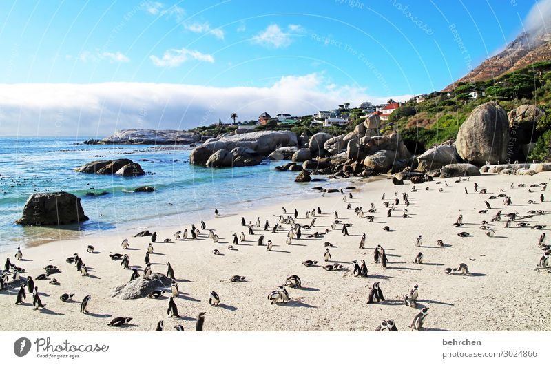 order in chaos | beach meeting Boulders Beach Animal portrait To enjoy Nature Water Longing Rock especially Dream Sunrise Dawn Deserted Sunlight Clouds