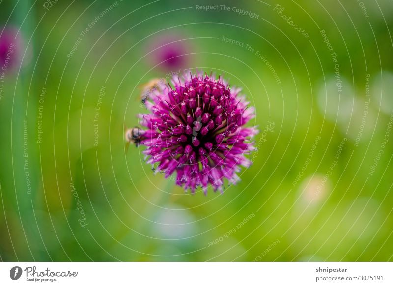 Nature Plant Landscape Animal Environment Exceptional Pink Flying Weather Earth Blossoming Climate Help Discover Elements Insect
