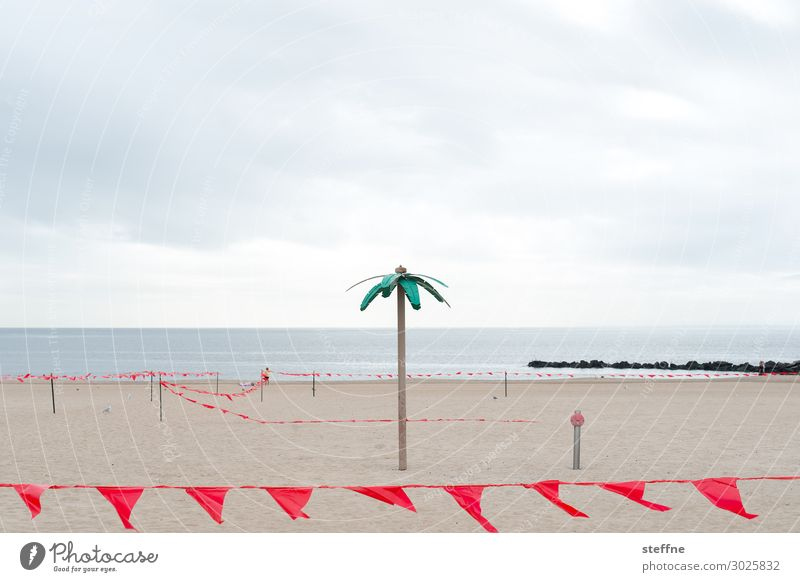 palm beach Sand Bad weather Gloomy New York City Coney Island Palm tree Palm beach Party Vacation & Travel Sadness Empty nothing going on flag Clouds Irony