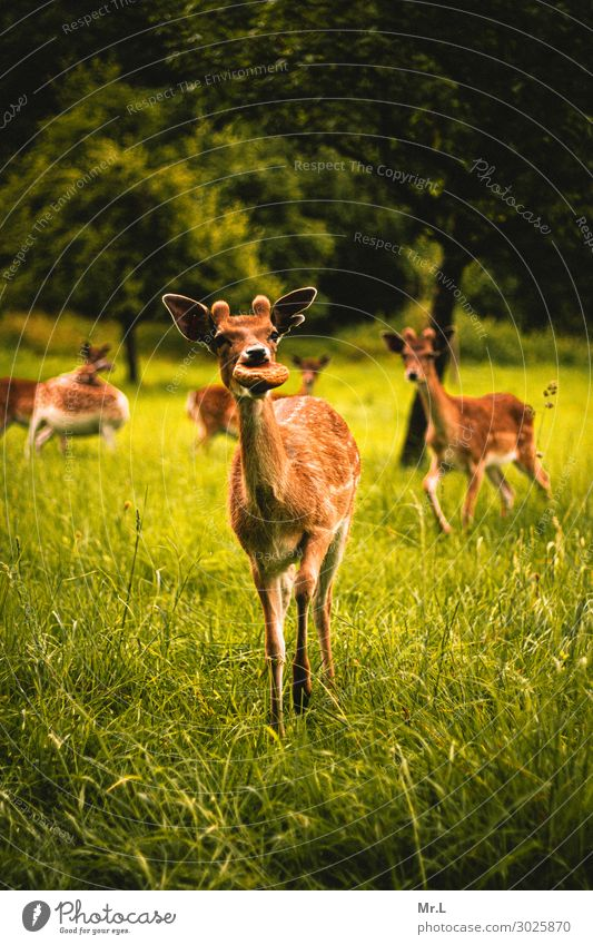 You got any bread? Environment Nature Beautiful weather Tree Grass Animal Wild animal 1 Group of animals Feeding Happiness Together Happy Natural Warmth