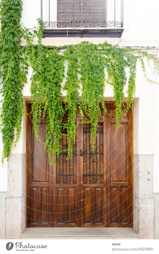 Old Plant Natural Building Door Esthetic Manmade structures Foliage plant Cordoba