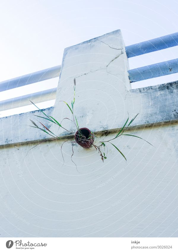 uncontrolled growth Grass Deserted Wall (barrier) Wall (building) Handrail Downpipe Pipe Drainpipe Growth Blue Green White Transience Change City life