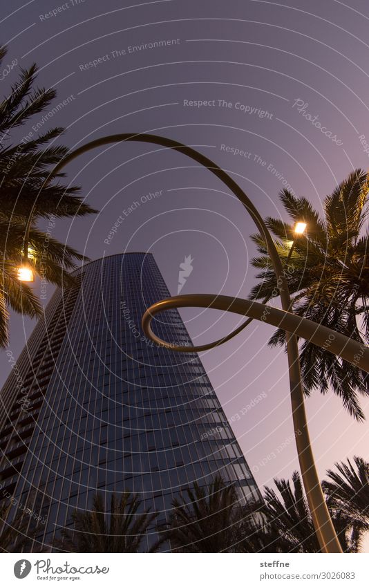 . Town Art Street lighting Lantern Whorl Palm tree San Diego High-rise purple clouds Colour photo Exterior shot Deserted Copy Space top Twilight Sunrise Sunset