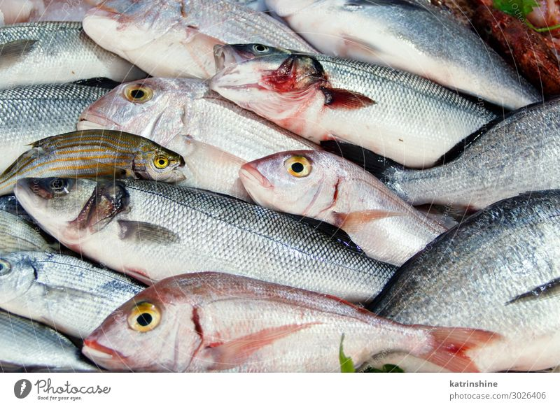 Mixed fish for sale on a market Seafood Nutrition Ocean Fresh Italy South mediterranean paca Provence Sale fisherman fishmonger Raw fishing Mediterranean sea