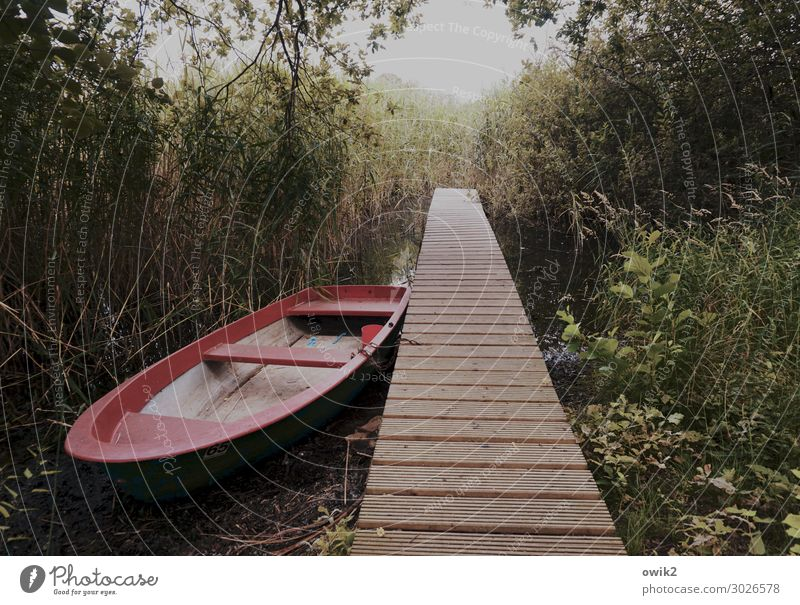 Nature Plant Relaxation Calm Wood Environment Grass Lake Bushes Beautiful weather Wait Simple Serene Meditation Footbridge Caution