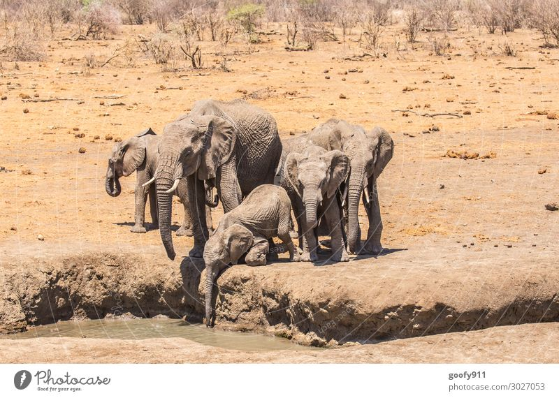 thirsty Vacation & Travel Tourism Trip Adventure Far-off places Freedom Safari Expedition Environment Nature Landscape Earth Sand Water Sunlight Warmth Drought